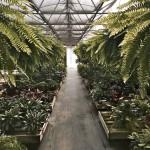 And isle upon isle of those amazing ferns