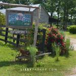 Welcome to Jenny Jack organic farm