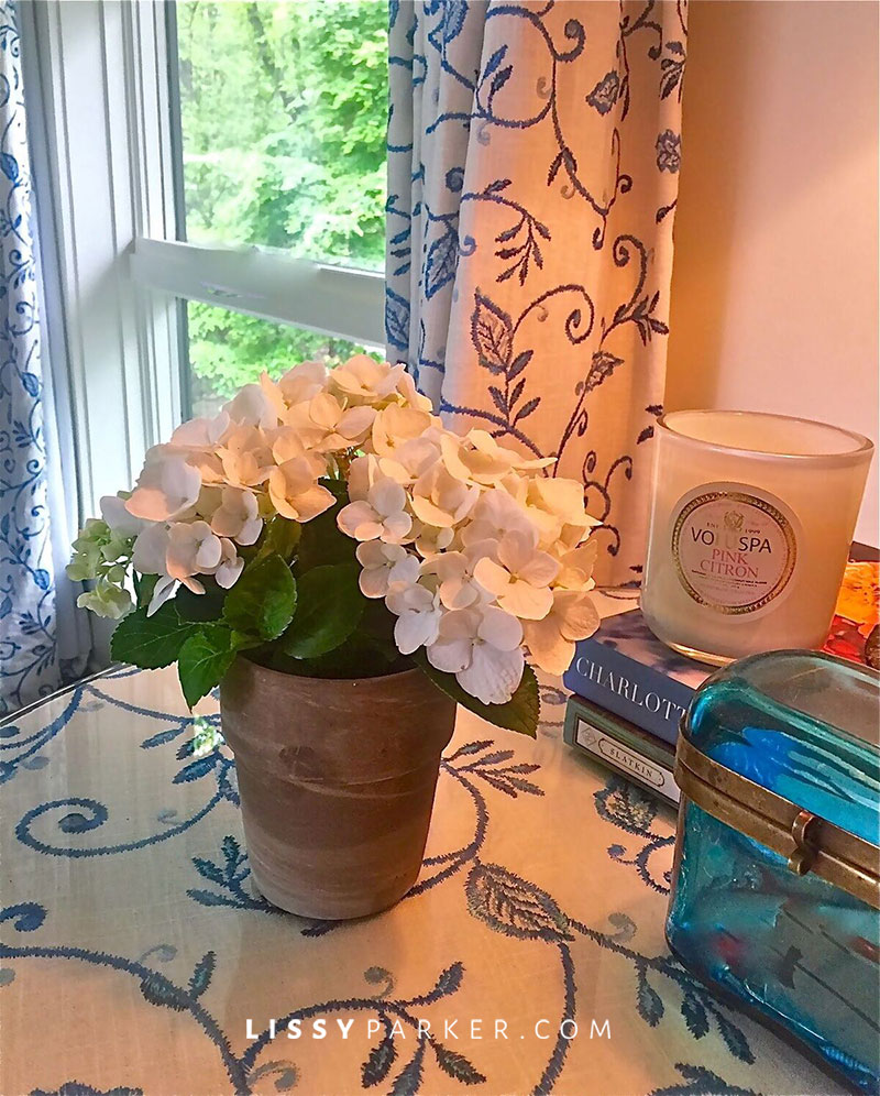 Small potted white hydrangea