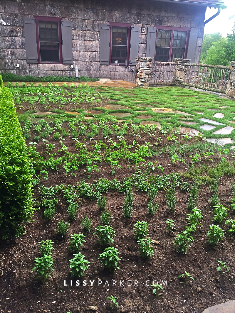 new herb garden in the mountains