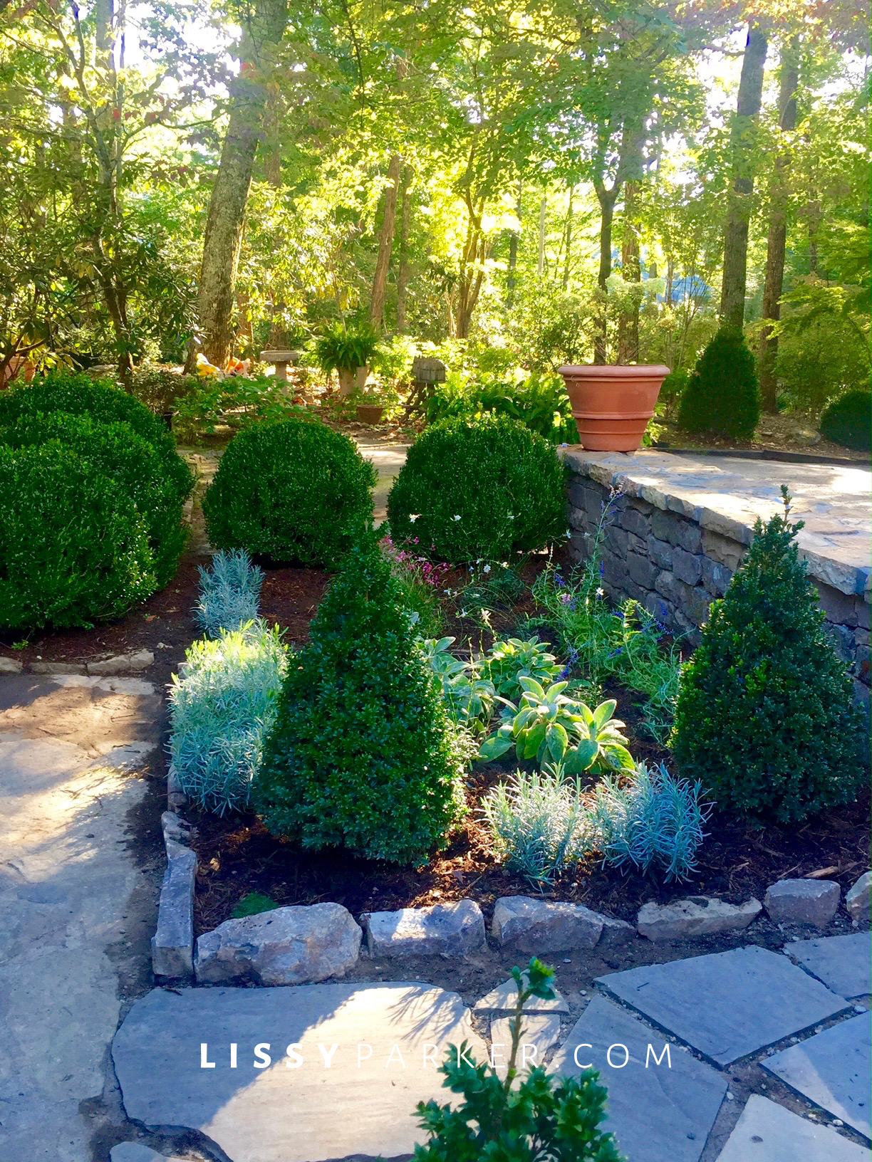entry garden toipary boxwood
